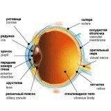 Лечение глаз пептидами