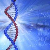 белки, пептиды