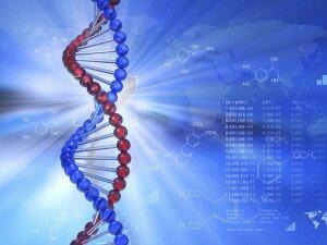 пептиды и белки