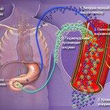 диабет и пептиды