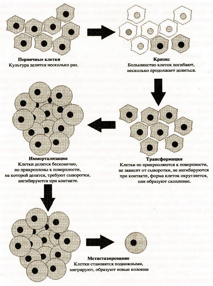 Женолутен 20, пептидный биорегулятор, – препарат для лечения.