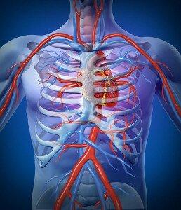 Лечение пептидами сердца