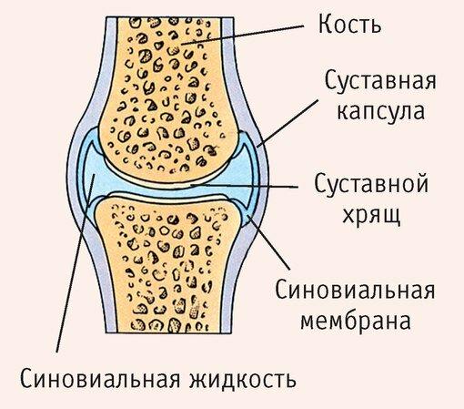 Отзывы / пептиды хавинсона | https://www. Ozdorovlenie-peptidi. Ru/.